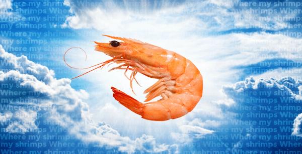 shrimps-meme