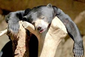 последняя неделя мая для биткоина была медвежьей