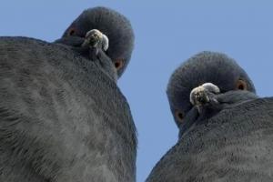 Сервис Pigeoncoin взломан. Размер ущерба - 235 млн PGN