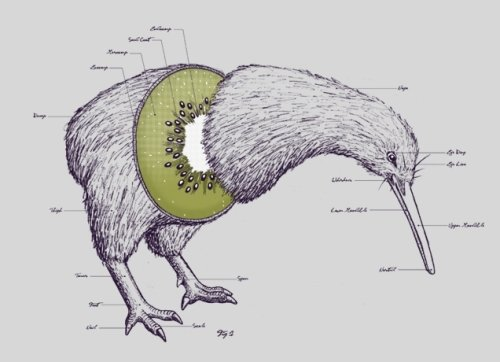 В Новой Зеландии выпустят стейблкоин, привязанный к новозеландскому доллару
