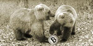 Курс биткоина может снизиться до $2-3 тыс., - Артур Хэйес