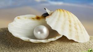 После форка и ребрендинга платформа Oyster стала сервисом Opacity