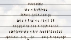Silver Miller считает Coin Signals классической пирамидой с использованием криптовалют