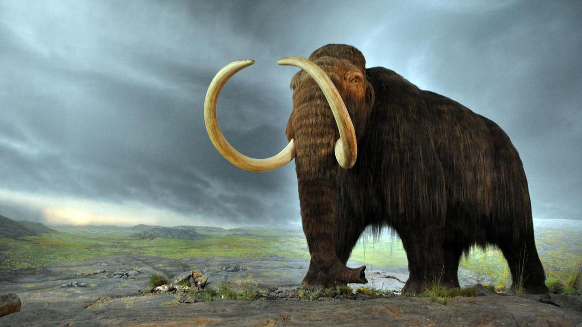 Биткоин-миллиардеры вложили деньги в воскрешение шерстистых мамонтов
